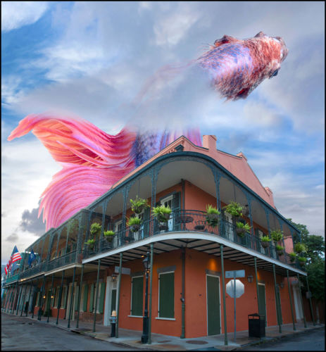 fish_over_house_final (1)